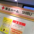 shibu2