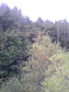 田舎の裏山
